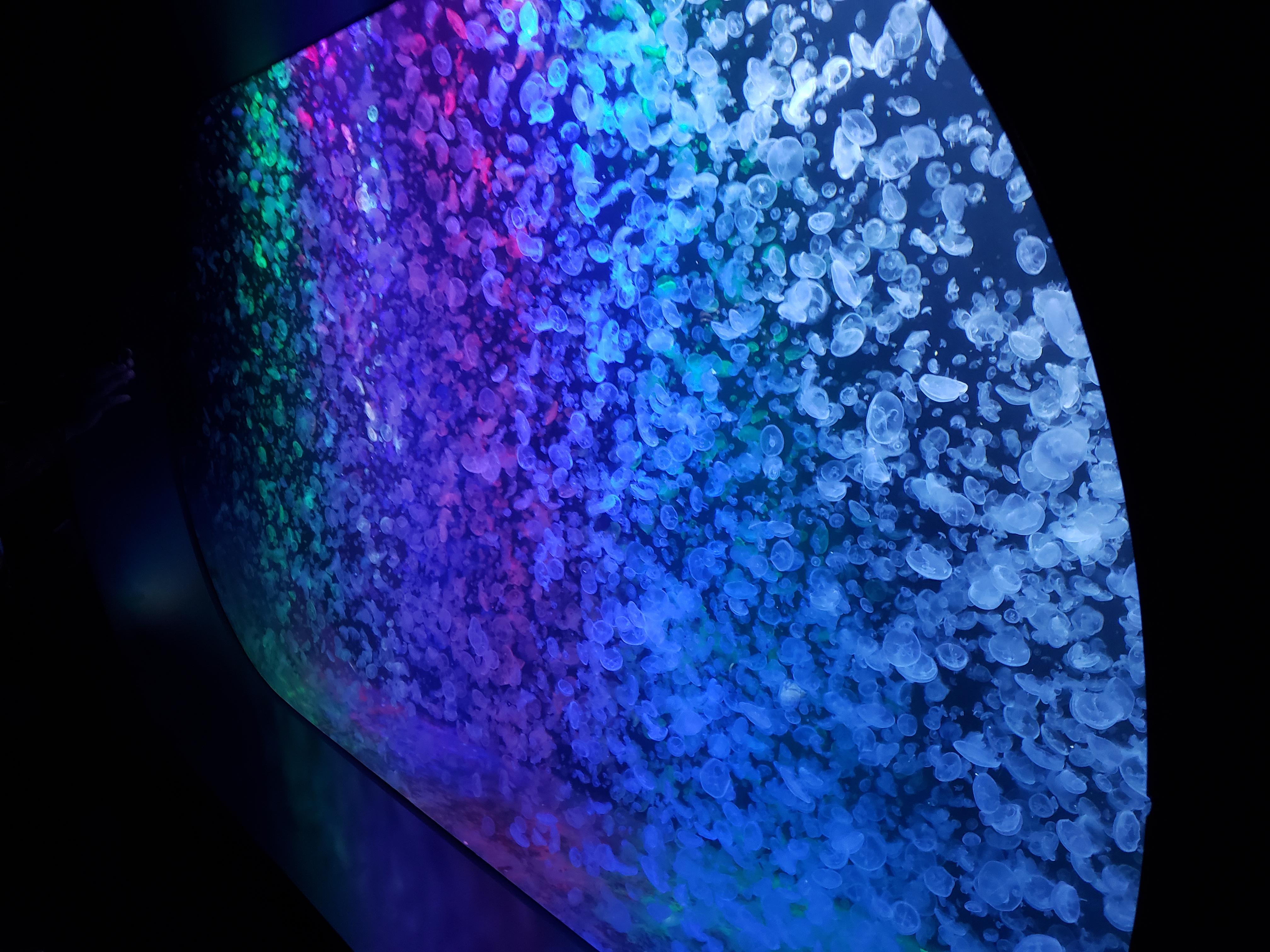 加茂水族館のライトアップされたクラゲ